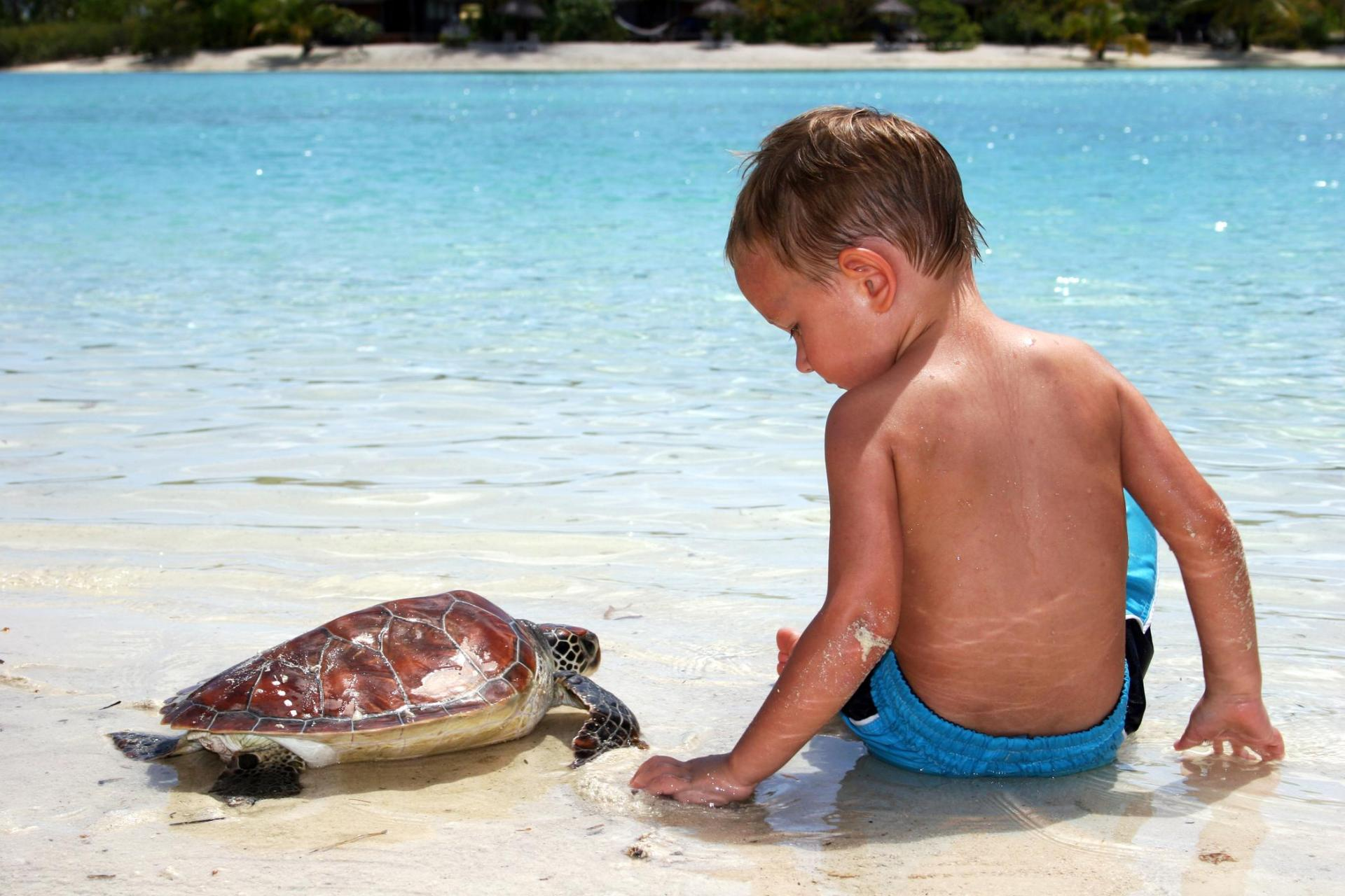 Toddler with Turtle, Le Méridien Bora Bora