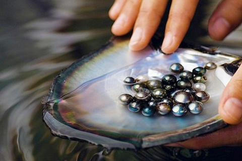 Tahitian Black Pearls, SOURCE: Searching for Paradise